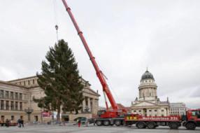Wer bringt den Weihnachtsbaum am Gendarmenmarkt?